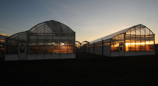 Wooster campus greenhouses
